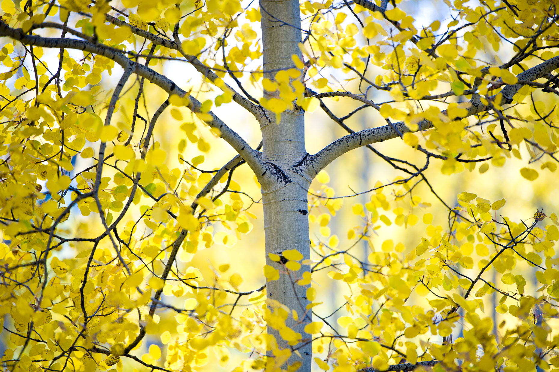 colorado_fall_color_16