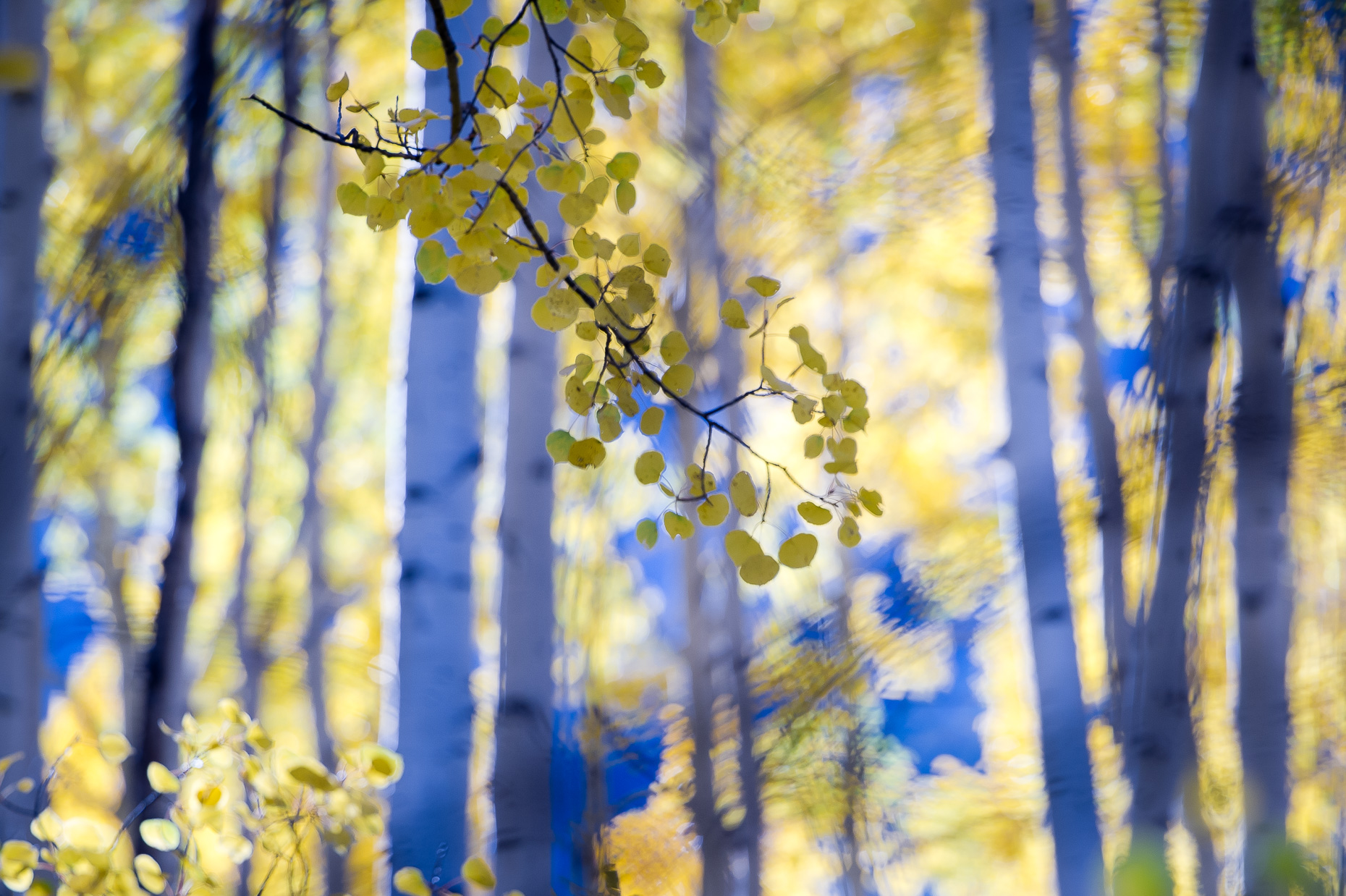colorado_fall_color_17