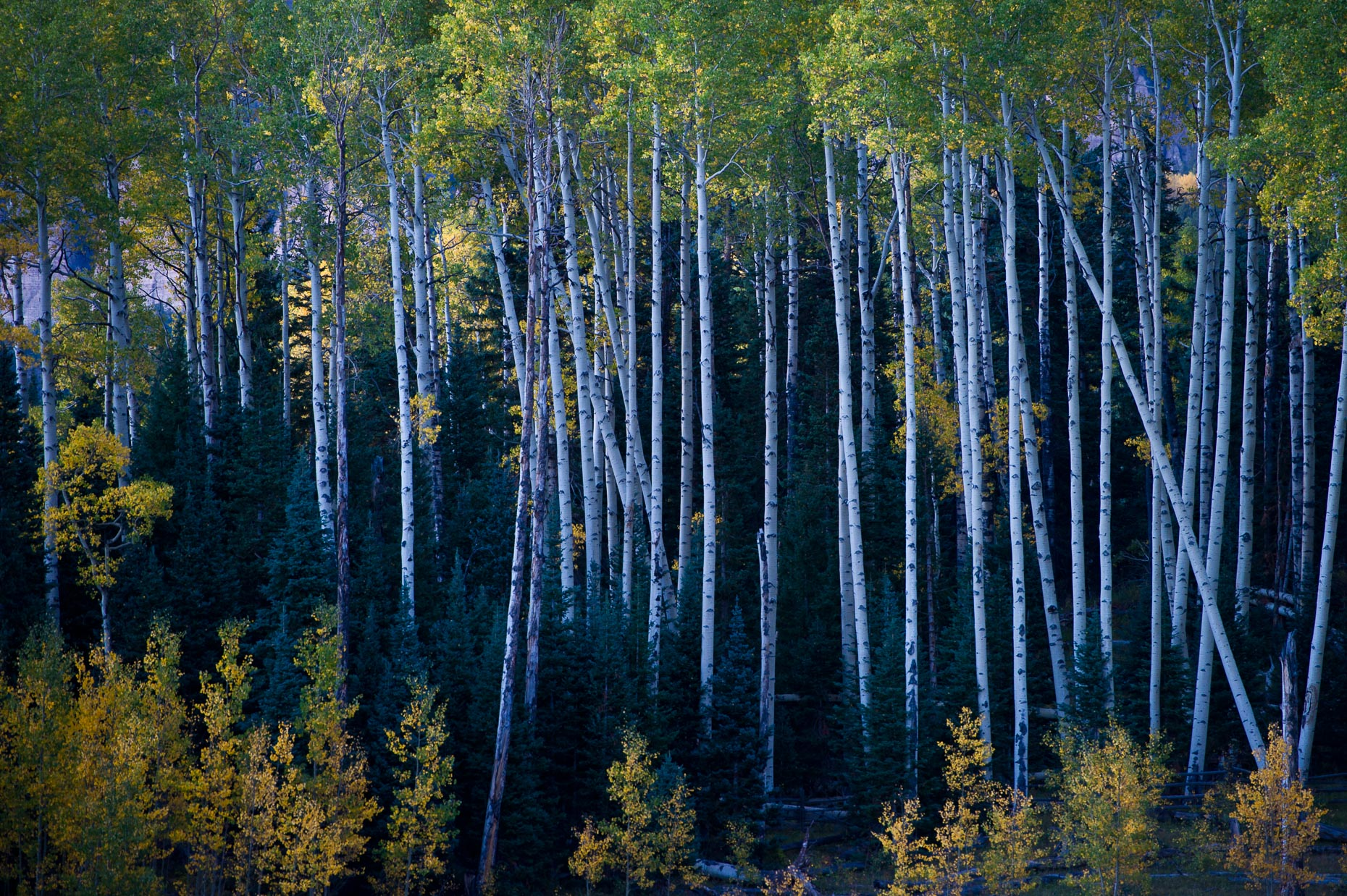 colorado_fall_color_21