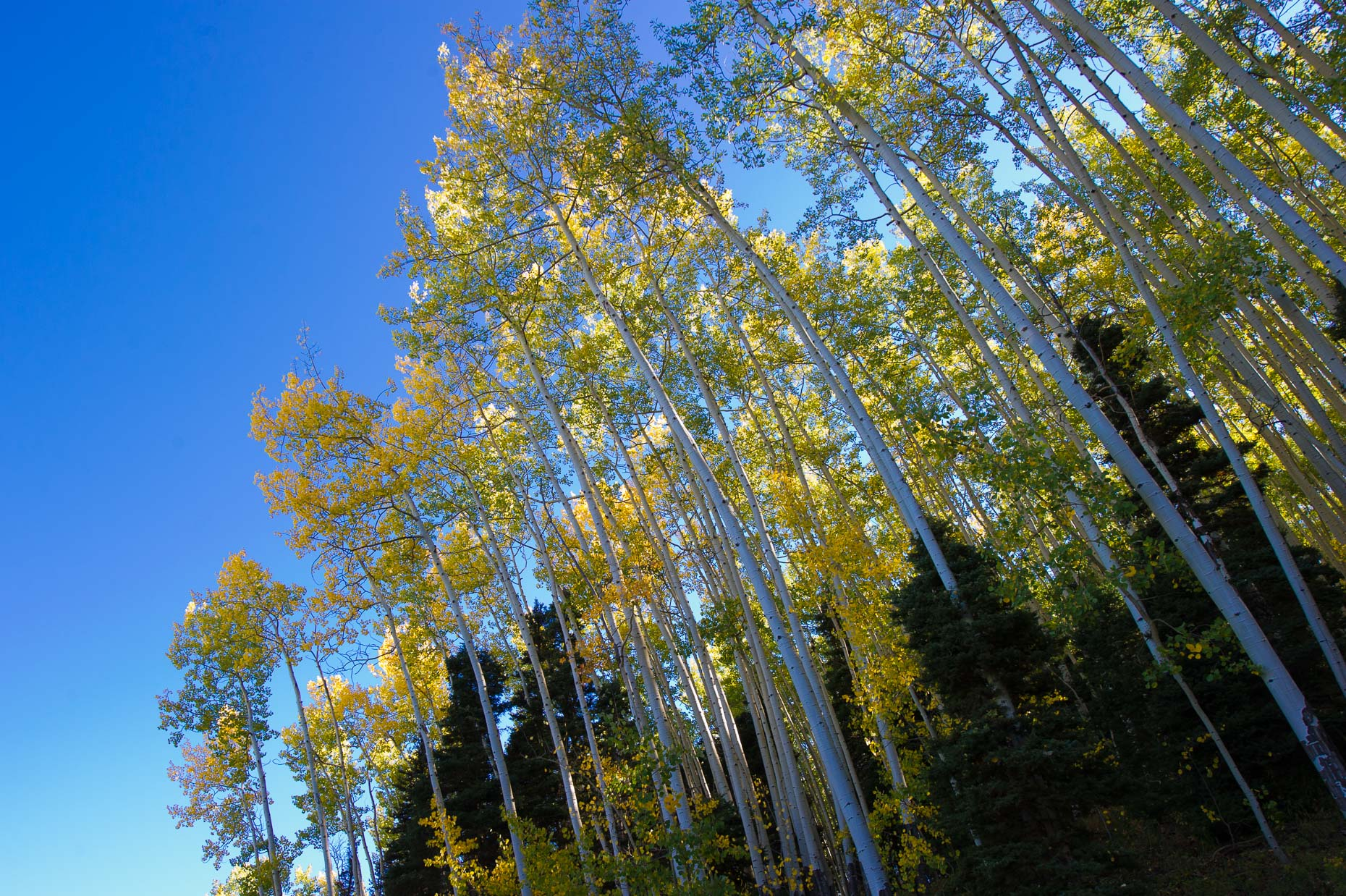 colorado_fall_color_23