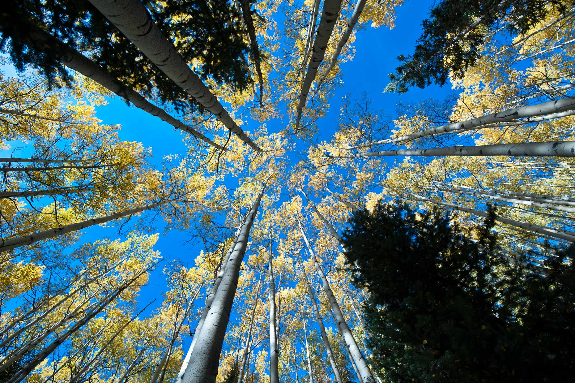 colorado_fall_color_6